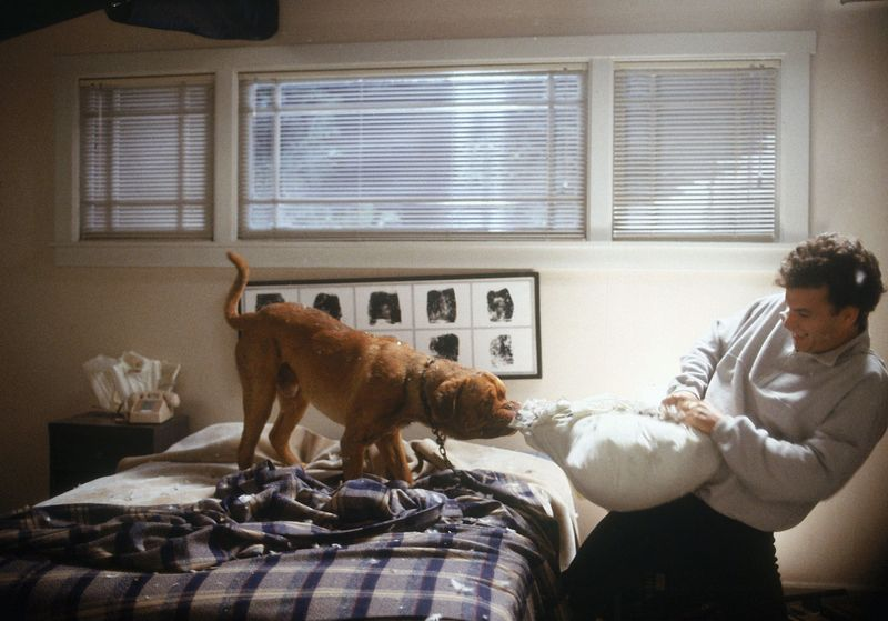 Der ordnungsliebende Polizist Scott (Tom Hanks) holt sich mit der Bordeaux-Dogge Huutsch eine Menge Chaos ins Haus. 1989 stahl der Hund dem damals weit weniger bekannten Tom Hanks die Show.