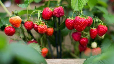 Dieses Gemüse und Obst hat im Mai Saison