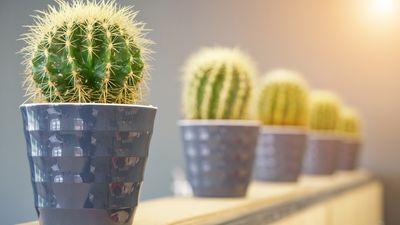 Es muss nicht immer Kaktus sein