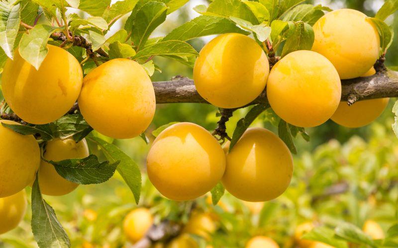 Besser als frisches Obst ist nur frisches Obst direkt vom Baum! Der Sommer ist da und damit eine Menge Obst- und Gemüsesorten, die regional verfügbar sind. Welche das sind, das lesen Sie in der Galerie ...