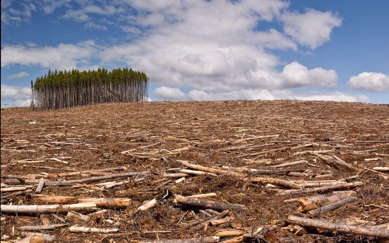 Laut Greenpeace verschwindet alle drei bis vier Sekunden ein Stück Wald in der Größe eines Fußballfeldes von unserem Planeten. Dabei sind Wälder unverzichtbar im Kampf gegen die Klimakrise, da sie große Mengen CO2 aus der Atmosphäre ziehen und im Holz sowie im Waldboden speichern. Mit Ihrem alltäglichen Handeln können auch Sie dazu beitragen, dass ein kleines Stück Wald mehr erhalten bleibt.