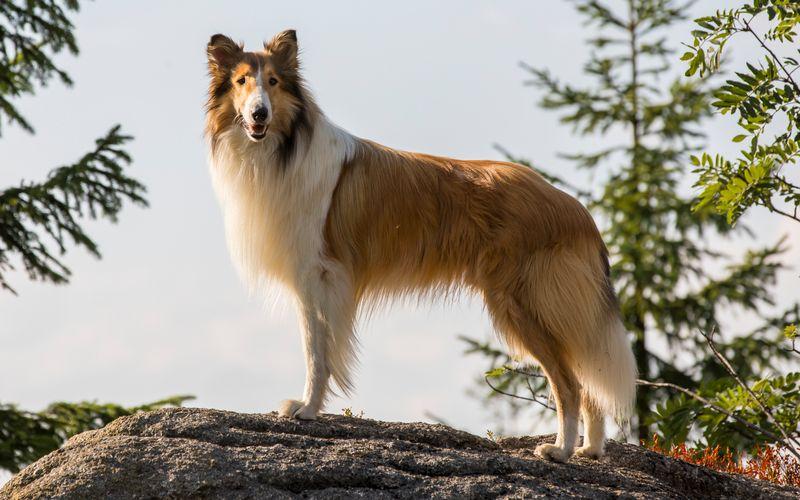"""""""Dogs are a man's best friend"""" - das wissen nicht nur Hundehalter, sondern auch zahlreiche Serien- und Filmemacher. Anlässlich des Welthundetags zeigen wir die berühmtesten vierbeinigen Hauptdarsteller, die in den letzten Jahren über die Leinwand und den Fernsehbildschirm getollt sind."""