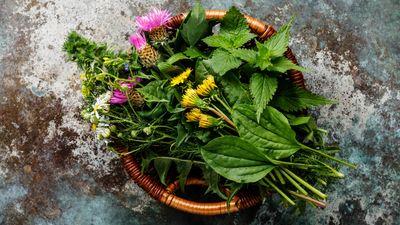 Naturkraft statt Chemiekeule: Diese 15 Heilpflanzen sollten Sie kennen
