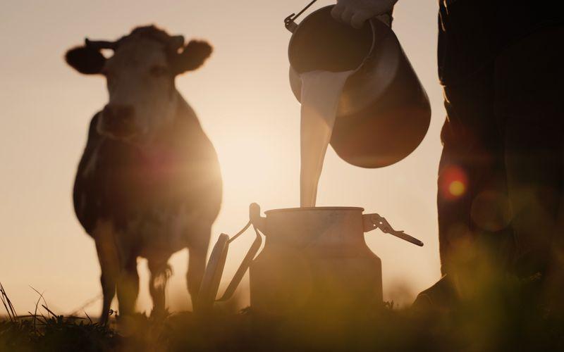 """Egal, wie unterschiedlich die einzelnen Milchprodukte auch sind, eines haben sie gemeinsam: Sie werden alle aus Rohmilch hergestellt. Diese wird in Viehbetrieben gewonnen. Doch ihr Bakterienaufkommen ist nicht für jeden bekömmlich: Vor allem Schwangere sollten auf Rohmilch verzichten. Im Supermarkt findet man sie oft als gefilterte """"Vorzugsmilch""""."""