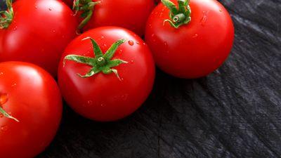 Tomaten-Wissen