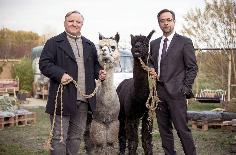 Glücklich mit Alpakas: Kommissar Frank Thiel (Axel Prahl, links) und Prof. Karl-Friedrich Boerne (Jan Josef Liefers) ermittelten im Umfeld einer Bio-Kommune.