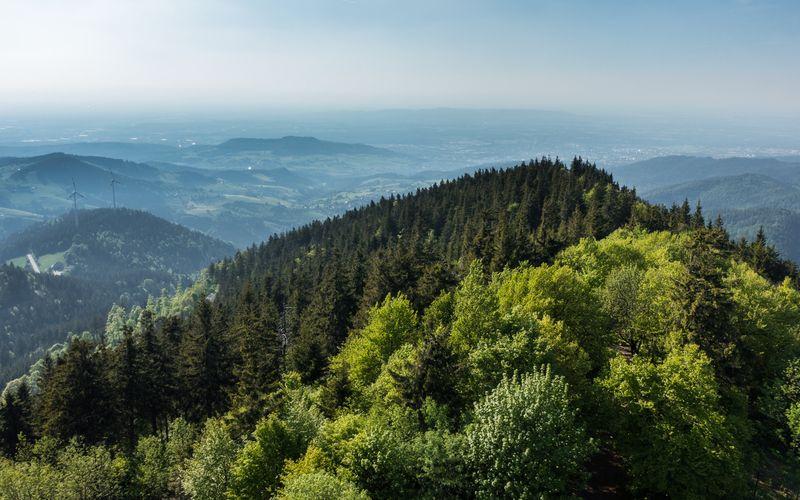 Immer mehr Menschen möchten nachhaltiger leben und ihren Plastikmüll verringern. Im Hinblick auf ein umweltbewussteres Leben sollten wir natürlich nicht nur unseren Plastikkonsum überdenken, sondern auch an den Schutz der Wälder denken. Wir verraten Ihnen, was Sie für die Erhaltung des Waldes konkret unternehmen können.