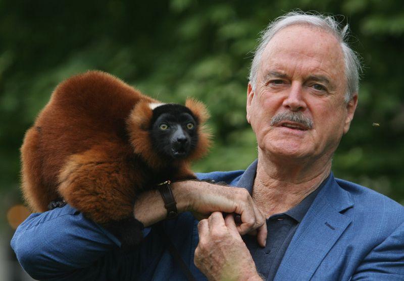 """John Cleese war laut eigener Aussage gerührt: 2005 wurde eine Lemuren-Art nach dem Monty-Python-Star benannt (""""Avahi cleesei""""). Die Ehre wurde Cleese zuteil, weil er sich für die Erhaltung der Art einsetzt. Manch andere Begründung, mit der neu entdeckte Arten nach Prominenten benannt wurde, liest sich da ungleich kurioser ..."""