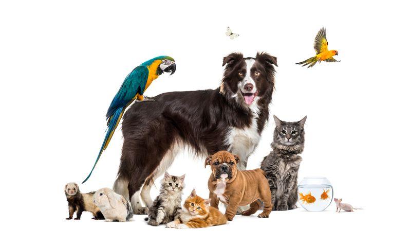 Wenn es darum geht, eine Situation treffend zu beschreiben, behilft sich die Menschheit rund um den Globus tierischer Redewendungen. Manchmal ist das gleiche Sprichwort in unterschiedlichen Sprachen gebräuchlich, wobei ein anderes Tier darin die Hauptrolle spielt. Das kann auch mal die Bedeutung verändern.