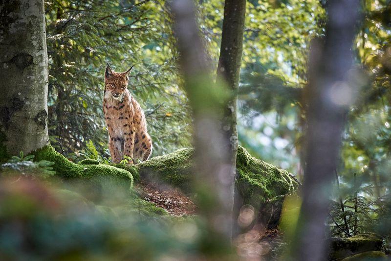 Nationalparks sind geschützte Naturräume der Erhaltung und Erholung. Die dort beheimateten Tiere und Pflanzen stehen unter besonderem Schutz. Doch unberührte Natur bietet auch für Menschen ein besonderes Erlebnis. Allerdings dürfen diese Gebiete nur auf vorgegebenen Wanderwegen mit Rücksicht auf Natur und Tierwelt betreten werden.