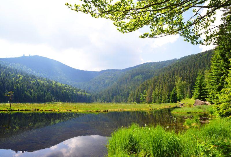 Ein berühmter Nationalpark Deutschlands ist der Bayerische Wald. Das Gebiet verläuft an der tschechischen Grenze und streckt sich auf 24.250 Hektar. Hier leben rund 40 Wildtiere und Vogelarten, die man auf ausgeschilderten Wander- und Radwegen bestaunen kann. Das Gebiet ist von rauschenden Bächen, natürlichen Bergseen, urigen Berghütten und Berggipfeln wie zum Beispiel dem Großen Arber geprägt.