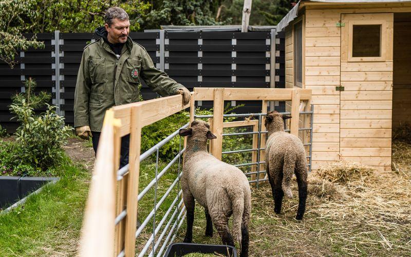 Eindrückliches Erlebnis: Schauspieler Hardy Krüger Jr. kümmert sich um seine beiden Schafe Hanni und Nanni.