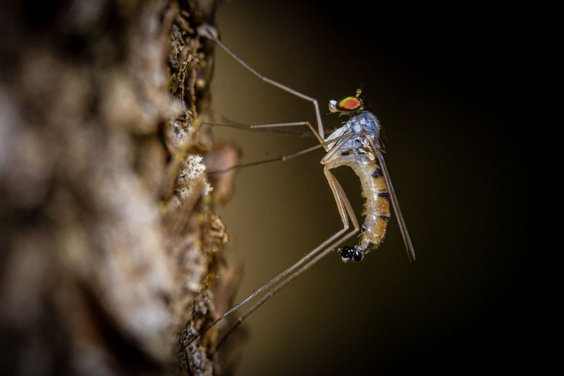 Besonders gefährlich sind Stechmücken, weil sie als Überträger tödlicher Krankheiten wie etwa Malaria, Zika-Virus oder Dengue-Fieber gelten. Ohne Behandlung nach dem Stich sterben rund 430.000 Menschen pro Jahr an der tropisch-subtropischen Krankheit Malaria - und es werden auf lange Sicht gesehen mehr. Aufgrund der Erderwärmung breiten sich die Stechmücken nämlich immer weiter aus.