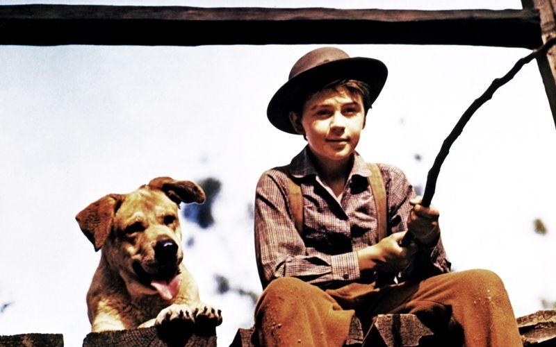 """1957 spielte Tommy Kirk die Hauptrolle Travis Coates in """"Sein Freund Jello""""."""